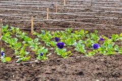 Un lavoro di giardinaggio sulla marcatura del letto di fiore fotografia stock libera da diritti