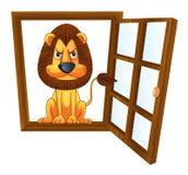 Un león en una ventana Imagen de archivo