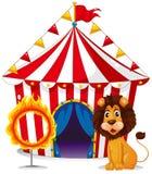 Un león y un fuego suenan delante de la tienda de circo Fotografía de archivo libre de regalías