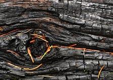Un legno carbonizzato degli aghi del pino attillato Fotografia Stock