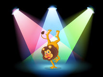 Un leone che esegue in mezzo alla fase Fotografia Stock