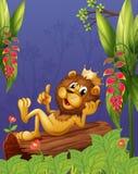 Un leone di re che si trova in un tronco Immagini Stock