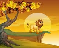 Un leone vicino alla scogliera della montagna Immagini Stock Libere da Diritti