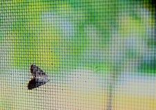 Un lepidottero sullo schermo Fotografia Stock
