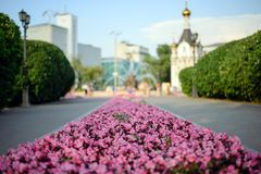 Un letto di fiore di bei fiori immagini stock libere da diritti