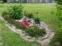 Un letto di fiore nel giardino Fotografia Stock
