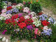 Un letto di fiore nel giardino Fotografie Stock Libere da Diritti