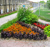 Un letto di fiore nel giardino Immagine Stock