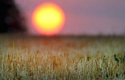 Un lever de soleil de paysage près d'Odessa Photo stock