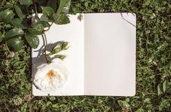 Un libro abierto con páginas vacías, una flor blanca de la rosa y un trébol verde Concepto romántico Copie el espacio Imagen de archivo