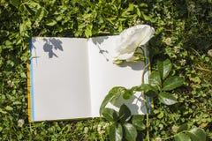 Un libro abierto con páginas vacías, una flor blanca de la rosa y un trébol verde Concepto romántico Copie el espacio Fotografía de archivo libre de regalías