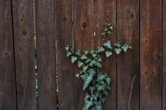 Un lierre qui s'élève le long d'une barrière en bois photographie stock libre de droits