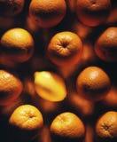 Un limón rodeado por las naranjas Imagen de archivo