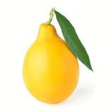Un limone con la foglia ed il ramoscello ha isolato la foto sopra Fotografie Stock Libere da Diritti