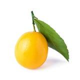 Un limone con la foglia ed il ramoscello isolati su bianco Fotografie Stock