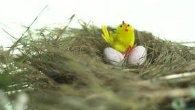 Un lindo, pollo del juguete se sienta en los huevos de codornices en una jerarquía