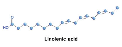 Un linolénique est un acide gras d'Omega 3 Images libres de droits