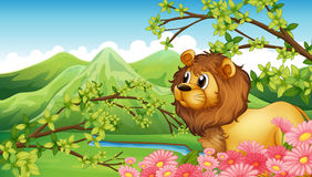 Un lion dans un Mountain View Photo stock