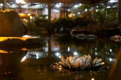 Lirio del zen Imagen de archivo