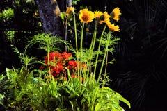 Un lit des wildflowers colorés attirera des colibris et des oiseaux de toutes les sortes images stock