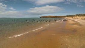 Un litorale ed il mare con gli uccelli sulla spiaggia archivi video