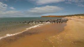 Un litorale ed il mare con gli uccelli sulla spiaggia video d archivio