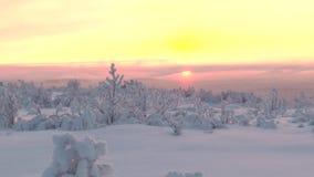 Un llano nevoso con la vegetación baja en el fondo del sol naciente almacen de video