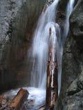 Un logarithme naturel d'arbre sous une cascade à écriture ligne par ligne Photographie stock