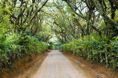 Un long voyage dans un chemin d'exploitation du Brésil Image stock