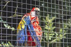 Un loro del ara en el parque zoológico de Cracovian fotos de archivo libres de regalías
