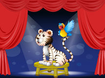 Un loro que se coloca en la cola de un tigre Foto de archivo libre de regalías