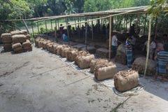 Un lotto di trasporto del lavoratore del tabacco dei tabacchi fuori di Dacca, Vatara, manikganj, Bangladesh Immagini Stock