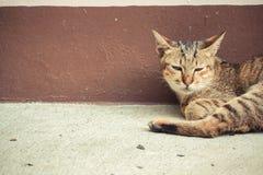 Un lyingon del gatto di soriano la terra Fotografia Stock Libera da Diritti