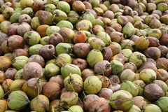 Un más viejo fondo de los cocos en la isla de Koh Samui Imagen de archivo