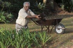 Un más viejo hombre que trabaja en el jardín con una carretilla Imagen de archivo