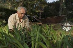 Un más viejo hombre que trabaja en el jardín con una carretilla Fotos de archivo