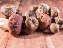 Un mélange des champignons moissonnés sur le vieux fond en bois photos stock