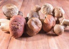 Un mélange des champignons moissonnés sur le vieux fond en bois images libres de droits