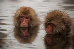 Un macaco in una prefettura di Nagano della sorgente di acqua calda, Giappone Fotografia Stock