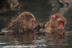 Un macaco in una prefettura di Nagano della sorgente di acqua calda, Giappone Immagine Stock