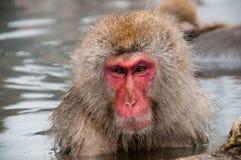 Un macaco in una prefettura di Nagano della sorgente di acqua calda, Giappone Fotografie Stock