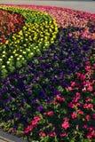 Un macizo de flores atractivo Fotografía de archivo libre de regalías