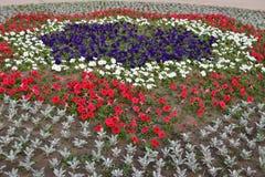 Un macizo de flores atractivo Fotos de archivo