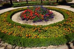 Un macizo de flores atractivo Foto de archivo libre de regalías