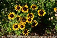 Un macizo de flores atractivo Foto de archivo