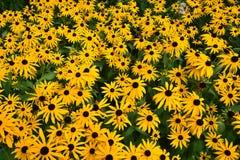 Un macizo de flores atractivo Imagen de archivo libre de regalías