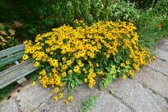 Un macizo de flores atractivo Fotografía de archivo