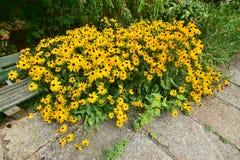 Un macizo de flores atractivo Fotos de archivo libres de regalías