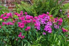 Un macizo de flores colorido Imágenes de archivo libres de regalías