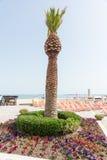 Un macizo de flores con una palmera en la costa de Sunny Beach en Bulgaria Imagenes de archivo